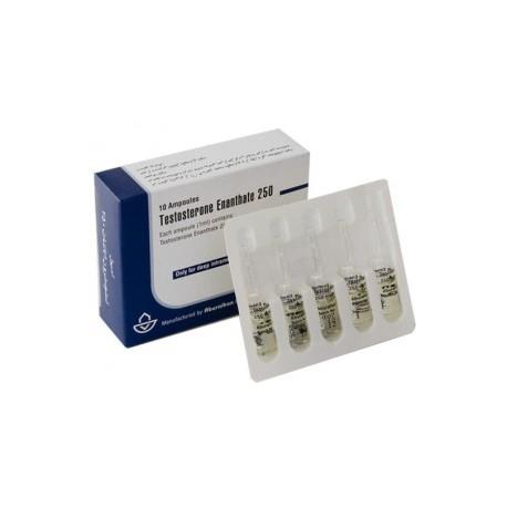 Buy Testosterone Enanthate 250 Aburaihan 1ml amp [250mg/1ml]